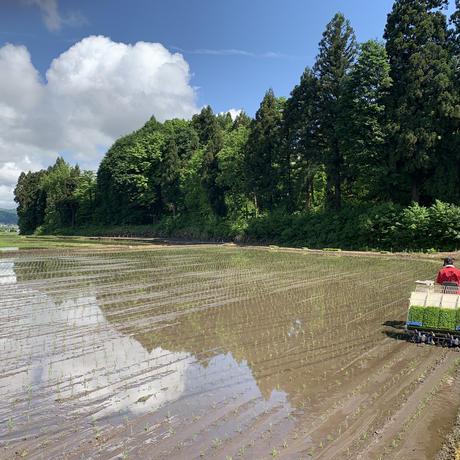 新米 魚沼産コシヒカリ 白米 5kg 令和2年度産