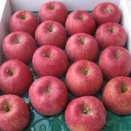 東根のりんご 10kg