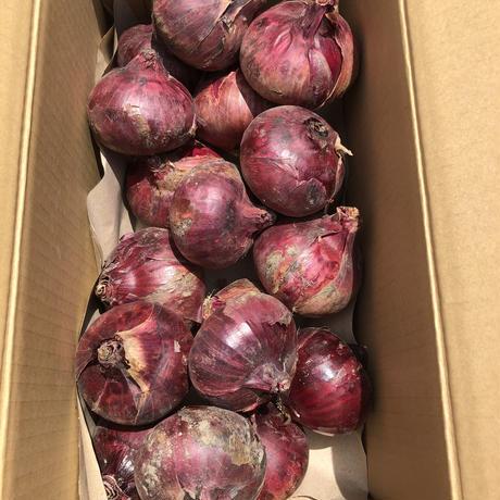 【お買い得】赤玉ネギ箱売り(大)発送1箱5kg ☆農薬不使用☆