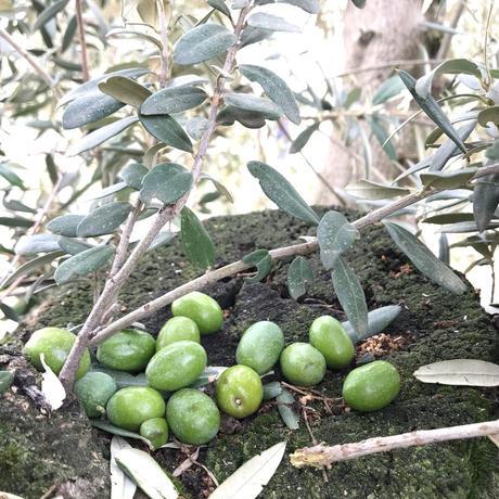 サハリ エキストラバージンオリーブオイル (ルシオ種) 250ml