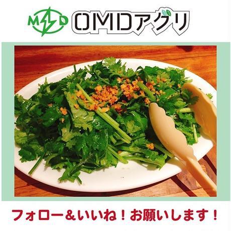 新鮮!OMDパクチー【1kg】