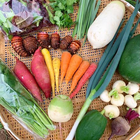大三島の無農薬野菜3セット・郷土料理レシピ付き