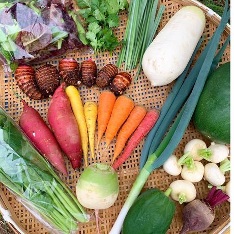 大三島の無農薬野菜セット・郷土料理レシピつき