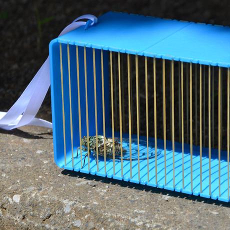 輪ゴムの虫かご rubber band insect cage