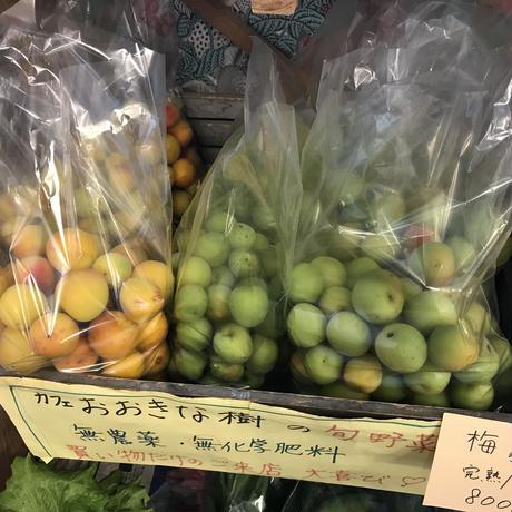 おおきな樹の梅1kg※要冷蔵便