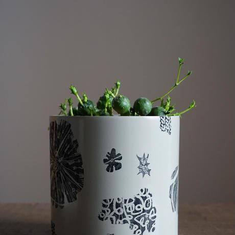 JUN KANEKO  鉢と植物・H