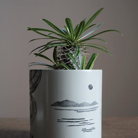 JUN KANEKO  鉢と植物・D