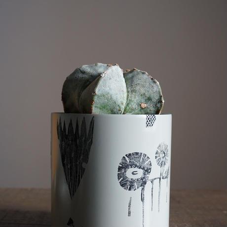 JUN KANEKO  鉢と植物・E