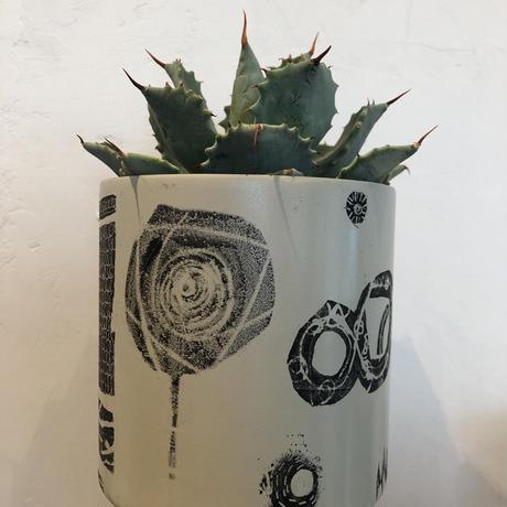 JUN KANEKO  鉢と植物  A