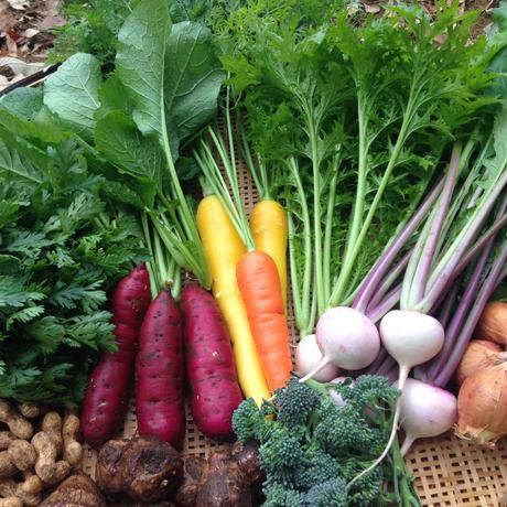 【町田産】農薬・化学肥料不使用 旬の野菜セット