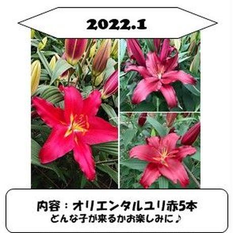 【1か月ごと】■2021ユリの定期便■Life with  Lilies~ユリと一緒に暮らしてみませんか?~毎月違うユリが生産者から直接届く!ワクワク感!発送先を変えることも可能です♪