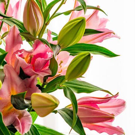 2021母の日【Bunch of Lilies  M】ユリさんを5本束ねました!日にち指定不可<(_ _)>5/2~5/8の間で発送!