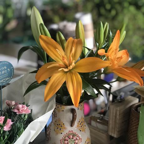 ❤︎Thanks basket❤︎変わり透かしユリ5本(切り花)とガーデンカーネーション苗のセットです!