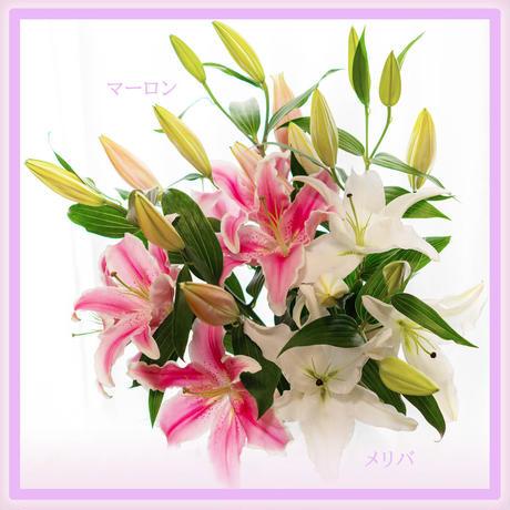 【Bunch of Lilies   M】ユリさん5本を束ねました!こちらはユリさんのbouquetです♥