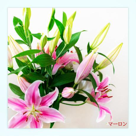 【Bunch of Lilies  L】ユリさんを7本束ねました!こちらはユリさんのbouquetです♥
