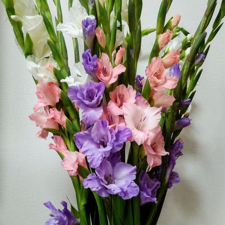 2021母の日【グローワーズ・セレクト M】~鮮度Max!生産者から直送のユリ・グラジオラスと枝ものの花束~4月30日までの完全予約制