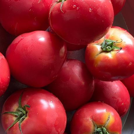 フレッシュトマトのケチャップ