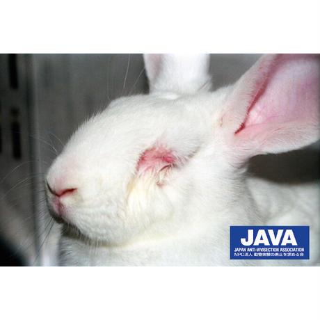 🐰動物実験について知ろう🐰