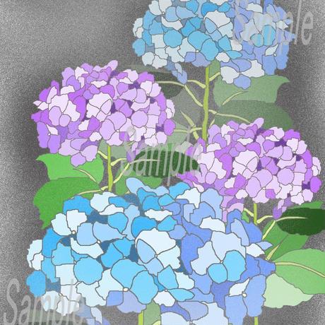 イラスト 紫陽花 ムラサキ A4サイズ 額入り 小さな美術館