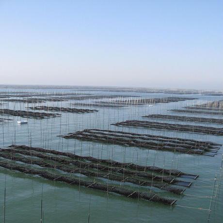 【福岡有明海漁業協同組合連合会】福岡有明のり 一番摘み焼き・味付けのり詰合せ
