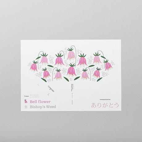 Bellflower カンパニュラ / Bishop'sweed レースフラワー