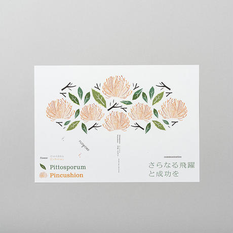 Pittosporm ピットスポルム  /  Pincushion ピンクッション