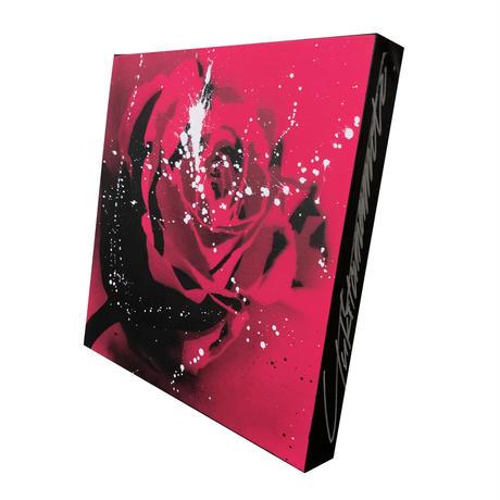Paint Rose L30  -Pink-