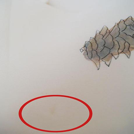 お取り置き中・【なごや帯】生成り色地 松ぼっくりに松葉手描き文 塩瀬 なごや帯