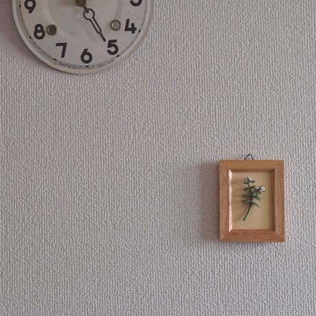 壁掛け ハコベ