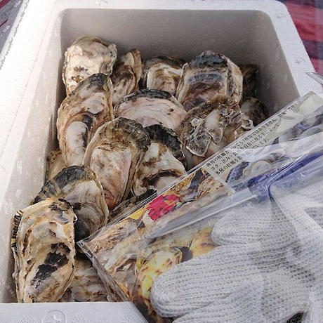 海男(佐賀県有明海産)殻付き牡蠣 25個入り