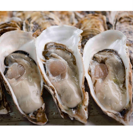 【愛知県初 生食用真牡蠣】朋輩牡蠣(ほうばいがき 愛知県篠島産)40個入り