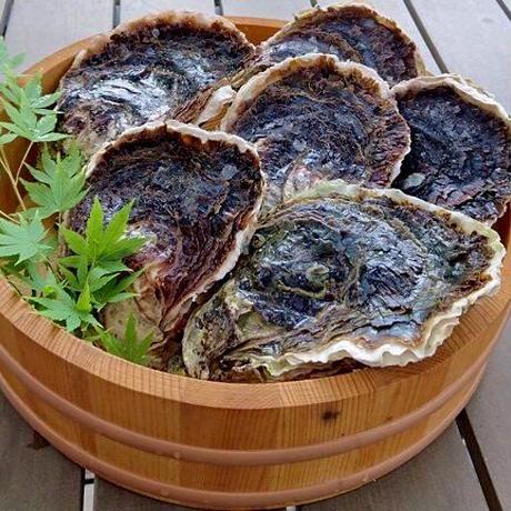 海男(佐賀県有明海)岩牡蠣 花美 10個入り