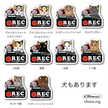 ドラレコステッカー -猫  CAT ネコ-  ドライブレコーダー ステッカー