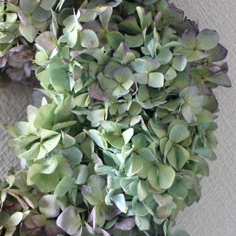紫陽花 (アジサイ) ドライフラワーリース ozf-060