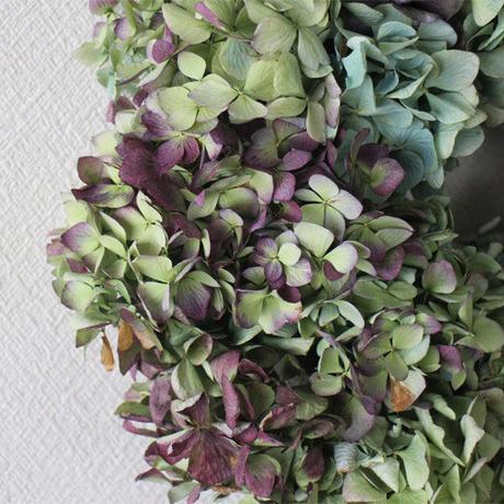 紫陽花 (アジサイ) ドライフラワー 大きめ リース  ozf-057 グリーン系