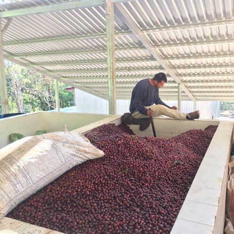 エルサルバドル / サンタロサ農園 パカマラ ハニー 100g