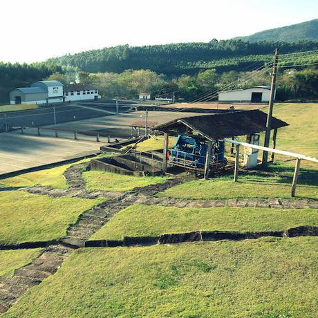 カショエイラ ダ グラマ農園 / ブラジル 100g