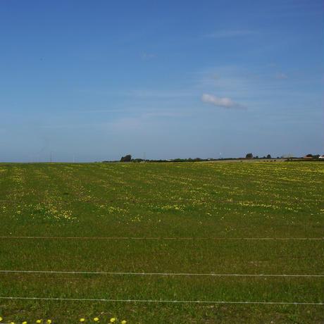 羊飼いの毛布のトートバッグ/草原に咲く花