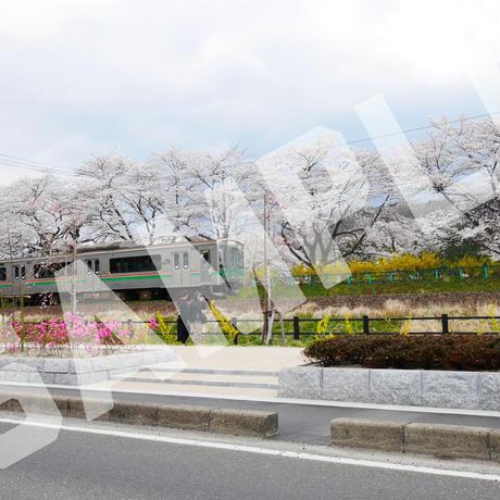 桜03と電車