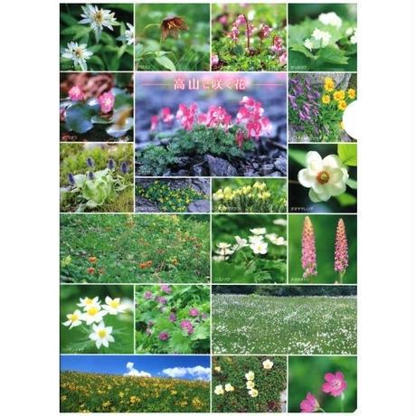 クリアファイル「高山に咲く花」