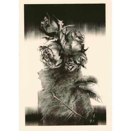 薔薇怒 NO2 Koharu 小春 2002年