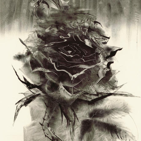 薔薇怒 NO1 Koharu 小春 2002年