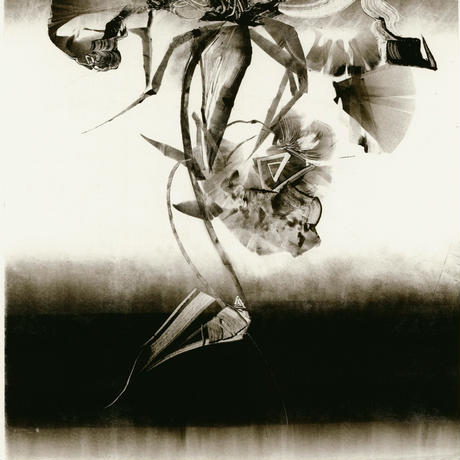 NYの薔薇  NO8 Koharu 小春 2000年
