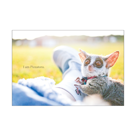 PIZZATORU Post Card /ポストカード [草原]