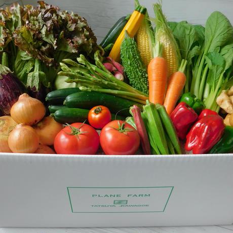 【お試し商品】旬のみやざきお野菜15品目セット+おまけ1品目