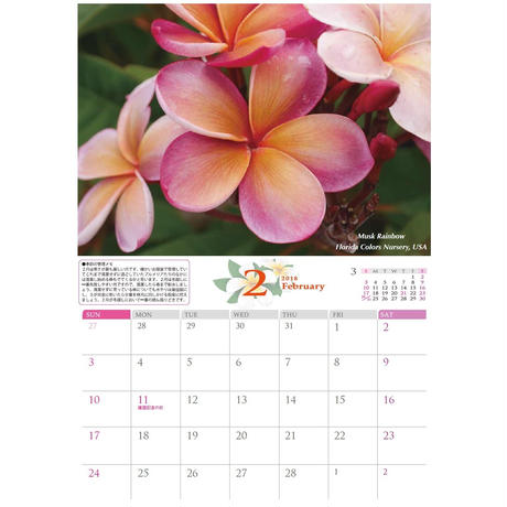 Calendar 2019 -Plumerias in the World (A3 size as a facing page)