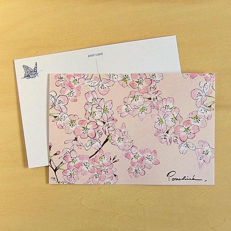 PC15 ポストカード 桜