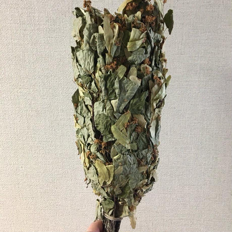 オーガニックサウナウィスク Linden (いわゆる菩提樹)2本