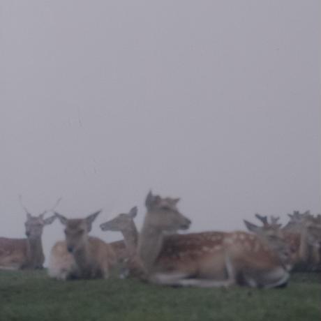 Fog and deer Ⅱ