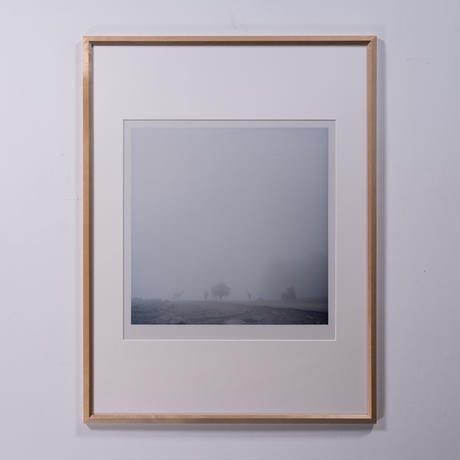 Fog and animals